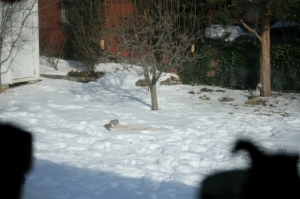 Squirrel on spillage - caught through the kitchen window