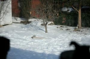 Squirrel on spillage - caught through the kitchen window