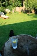 fizzie bevvie in the garden
