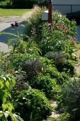 No path left in the sideyard garden