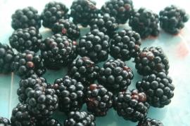 blackberry perfection