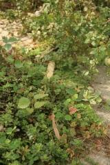 Praying mantis among the weeds, etc.