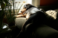 A Nino asleep on the couch