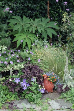 Tetrapanax paperifer combo with a pigeon planter