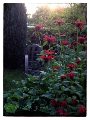 trash-picked symbolic seat with a beebalm view