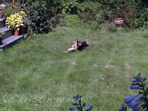 Happy dog in the garden (photo by Z)