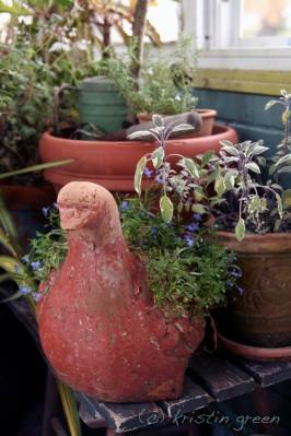 Tricolor sage and pigeon planter with lobelia