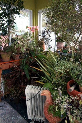 The plantry nearly filled and ready for winter