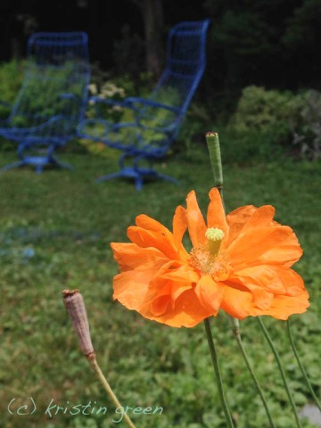 Atlantic poppy and its complementary blue bucket chairs