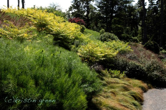 CMBG Haney Hillside Garden