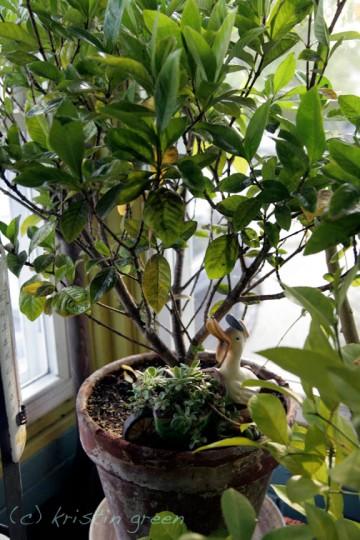 Gardenia and friend