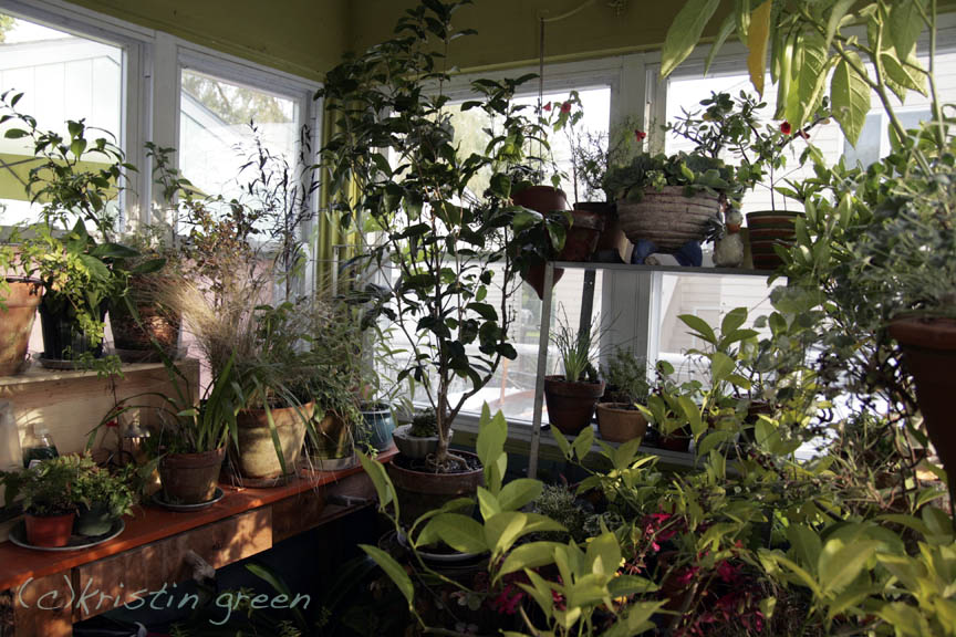 Down Earth Indoor Garden Grows Kristin Green Trench Manicure
