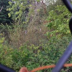 almost hidden perch